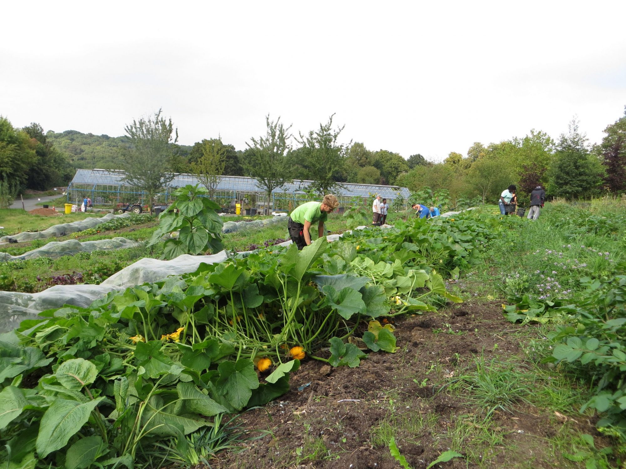 £1.34m fund to support community food and farming businesses