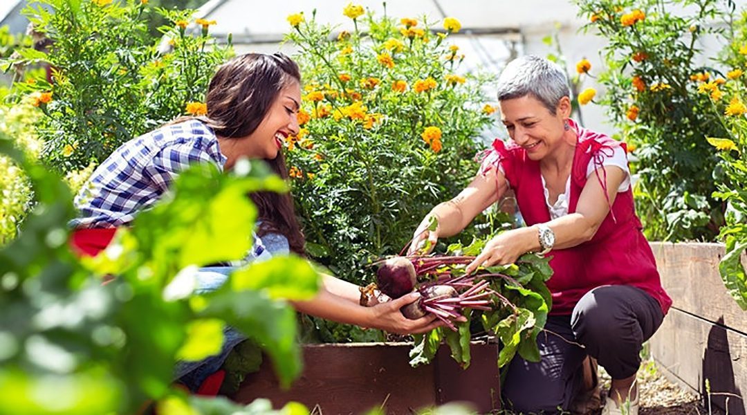 Continuity and Change: The role of volunteers in community businesses